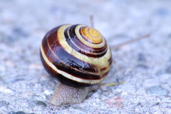 Snail on Cement Stock Image