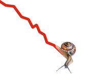 Snail on chart currency Stock Image