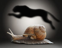 Snail with cheetah shadow. Concept graphic in soft vintage style.  stock photography