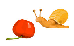 Snail with a cherry Stock Images