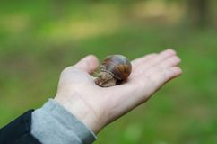 A snail on child hand on the green nature background royalty free stock images
