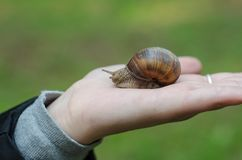 A snail on child hand on the green nature background royalty free stock image