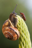 Snail and chinch royalty free stock photography