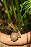Snail on clay jar Stock Images