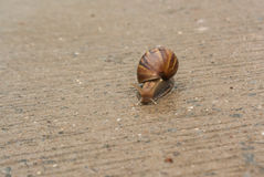Snail. Climb onto the concrete floor. Life slower pace of a Royalty Free Stock Image