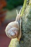 Snail climbing Royalty Free Stock Photos