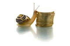 Snail climbing coins Stock Images