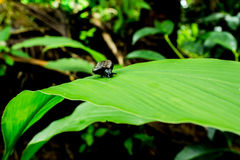 Snail climbing on green leaf Stock Photo