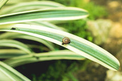 Snail climbing on a leaf Stock Photo