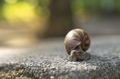 Snail climbing on the rock table in the morning stock photos