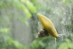 Snail climbing slowly on glass door with garden background Stock Photo