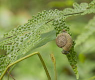 Snail is climbing on the tree Royalty Free Stock Photography
