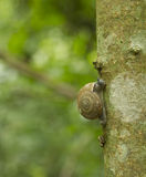 Snail is climbing on the tree Stock Photos