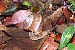 Snail is climbing up Royalty Free Stock Photos