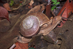 Snail is climbing up Royalty Free Stock Photo