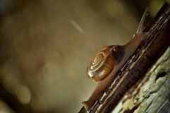 Snail Climbing A Wooden Fence Royalty Free Stock Images
