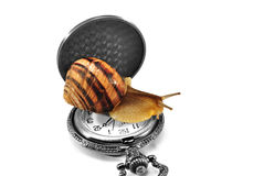Snail on the clock Stock Photo