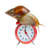 Snail on clock. Isolated n white background Stock Images