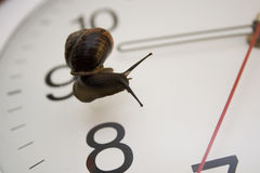 Snail and clock Stock Photo