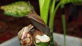 Snail close up. Beautiful snail close-up for backgrounds and textures Stock Photography