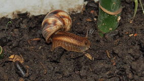 Snail close up. Beautiful snail close-up for backgrounds and textures Royalty Free Stock Images