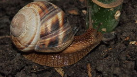 Snail close up. Beautiful snail close-up for backgrounds and textures Stock Photo