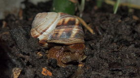 Snail close up. Beautiful snail close-up for backgrounds and textures Royalty Free Stock Photos