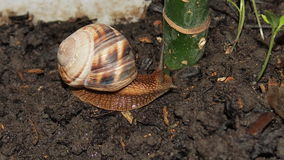 Snail close up. Beautiful snail close-up for backgrounds and textures Royalty Free Stock Photography