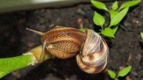 Snail close up. Beautiful snail close-up for backgrounds and textures Stock Images