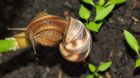 Snail close up. Beautiful snail close-up for backgrounds and textures Stock Photos