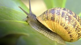 Snail, close up Royalty Free Stock Photos