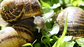 Snail, close up Stock Image