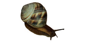 Snail close up. Snail on white background closeup Stock Photography