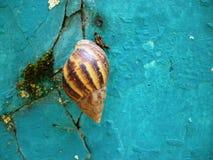 Snail closeup Stock Image