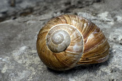 Snail closeup Royalty Free Stock Images