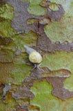 Snail. Closeup of a snail on wet tree bark with a rough texture Stock Photos