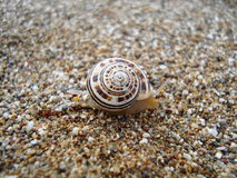 Snail on the coast of sea Royalty Free Stock Image