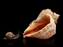 Snail and a cockleshell Stock Image