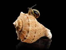 Snail and a cockleshell Stock Photo
