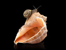 Snail and a cockleshell Royalty Free Stock Photography