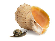 Snail and a cockleshell Stock Photos