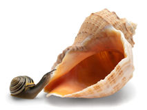 Snail and a cockleshell Royalty Free Stock Photo