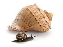 Snail and a cockleshell Stock Photos