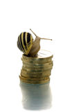 Snail on the coin pile Royalty Free Stock Image