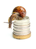 Snail on coins. Isolated on white background (focus on head Stock Photo