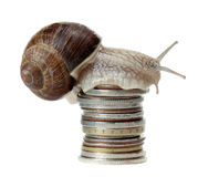 Snail on coins Royalty Free Stock Image