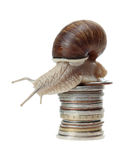 Snail with coins Royalty Free Stock Image