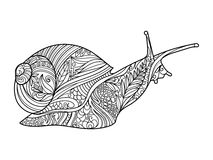 Snail coloring book for adults vector Royalty Free Stock Photography