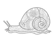 Snail coloring book for adults vector Stock Image