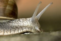 Snail macro photo close up royalty free stock photos